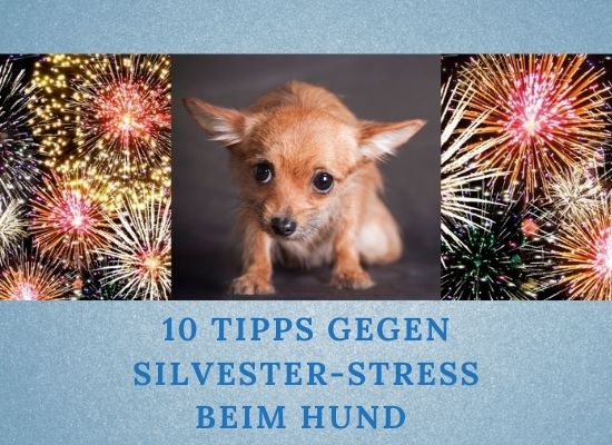 Lernpfote e.V. Podcast-Folge 057: 10 Tipps gegen Silvester-Stress beim Hund