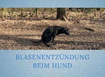 Lernpfote-Podcast Folge: 009 Blasenentzündung beim Hund