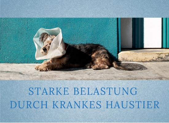 Lernpfote-Podcast: Folge 010: Starke Belastung durch krankes Haustier