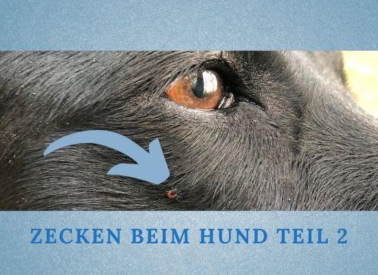 Zecken beim Hund Teil 2- Vorbeugen-entfernen-Schutz
