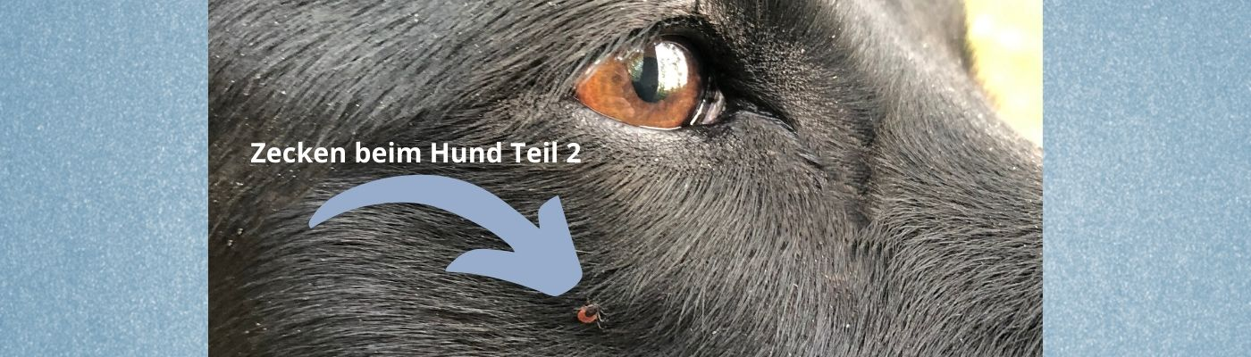 Schwarzkümmelöl Zecken Hund