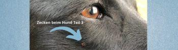 Zecken beim Hund Teil 3