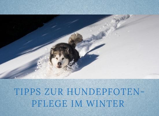 Lernpfote-Podcast Themen rund um den Hund Folge 006:Tipps zur Hundepfoten-Pflege im Winter