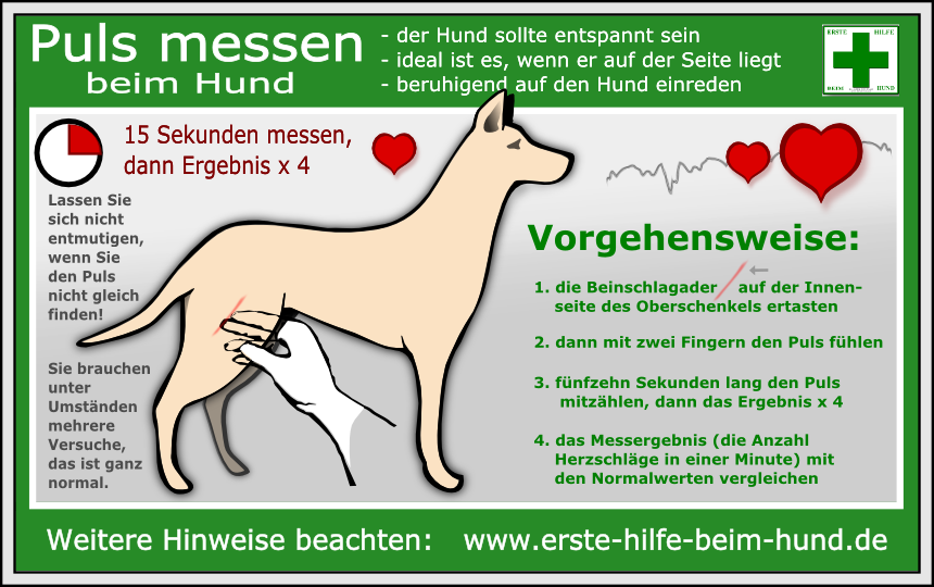 Lernpfote e.V., Erste-Hilfe-am-Hund-Grundlagen