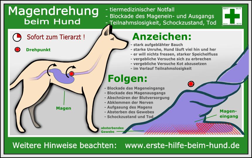 Lernpfote e.V., Erste-Hilfe-am-Hund-Sofortmaßnahmen