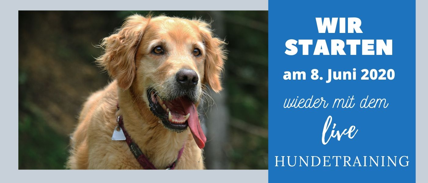 Live Hundetraining startet